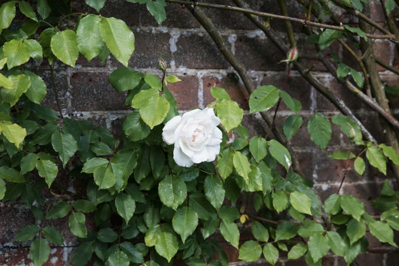 Caren Barry   Magical British Walled Gardens - Claydon Estate